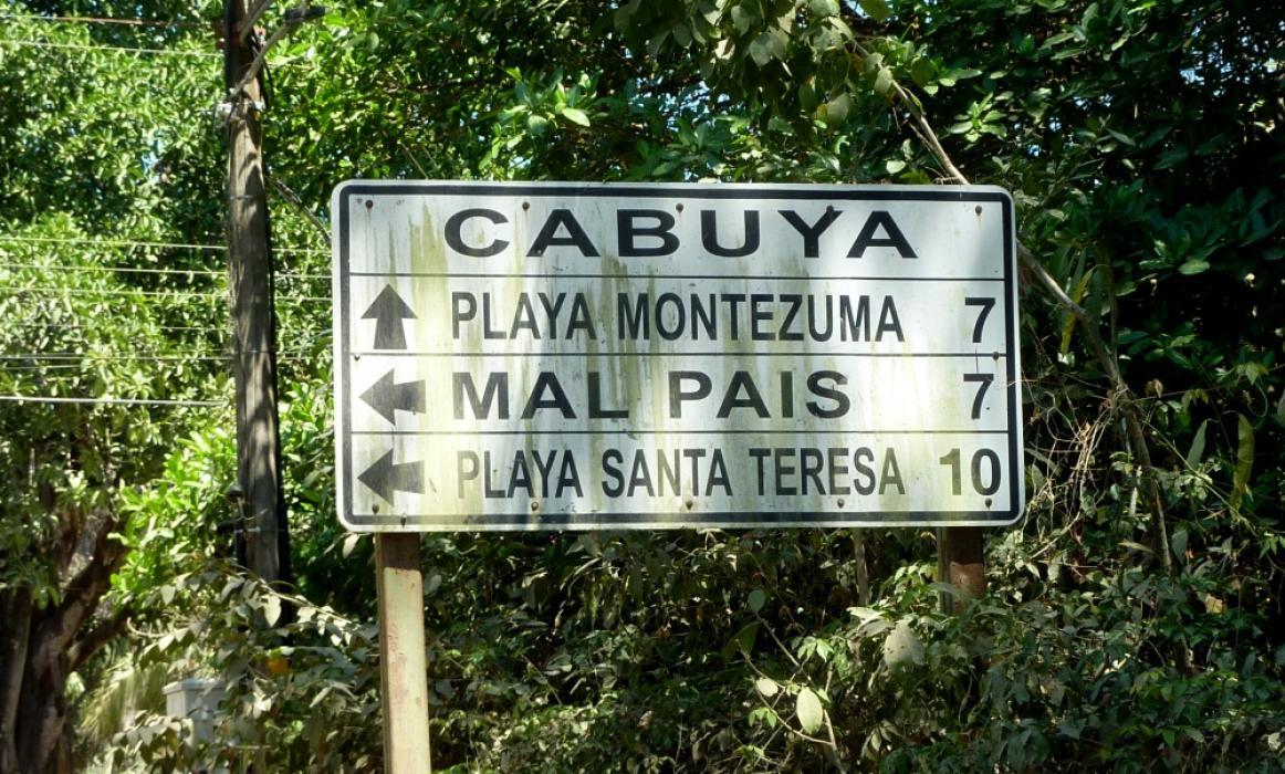 P1130401cabuya