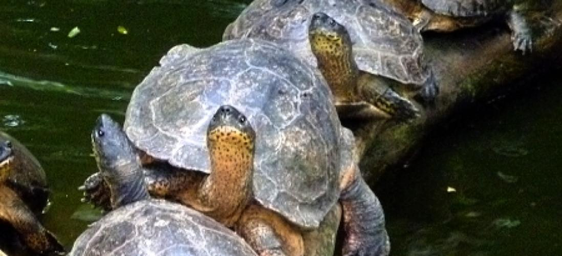 turtles-zoo-ave-alajuela- pura-vida