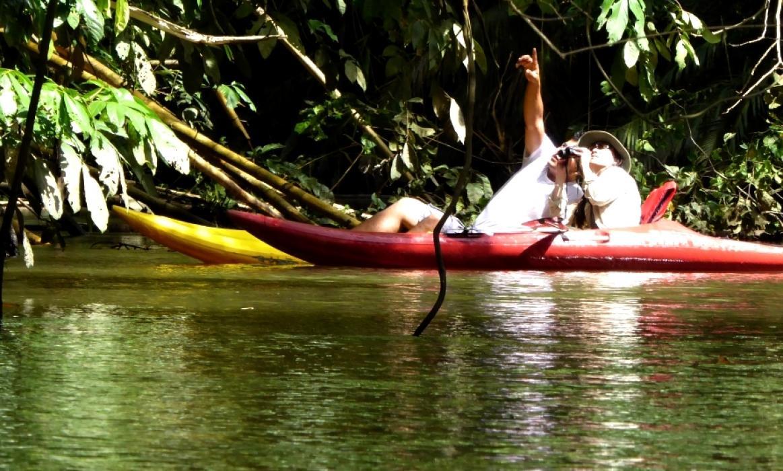 P1040490sierpe kayak