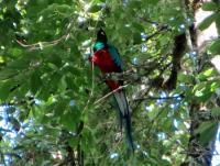 quetzal-copey-pura-vida-hotel-travel-toursJPG